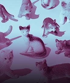 Top 20 des chats pas photogéniques du TOUT