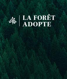 La Forêt Adopte : célébrer l'amour de nos utilisateurs
