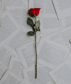 Top 5 des déclarations les plus poétiques d'Amours solitaires