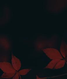 L'automne a ses joies, que les autres saisons n'ont pas