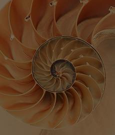 Coeur sous carapace : La théorie du bigorneau