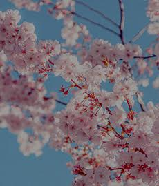 Les petits plaisirs du printemps (#spécial2021)